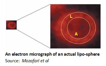 micrograph-of-lipo-sphere