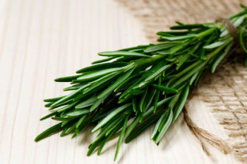 Rosemary May Boost Sugar Metabolism to Control Diabetes