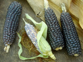 The Health Benefits of Blue Corn